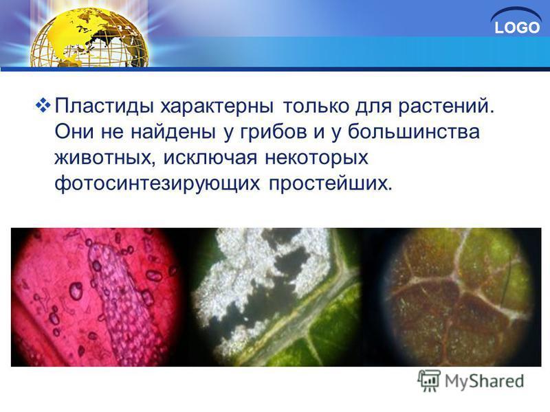LOGO Пластиды характерны только для растений. Они не найдены у грибов и у большинства животных, исключая некоторых фотосинтезирующих простейших.