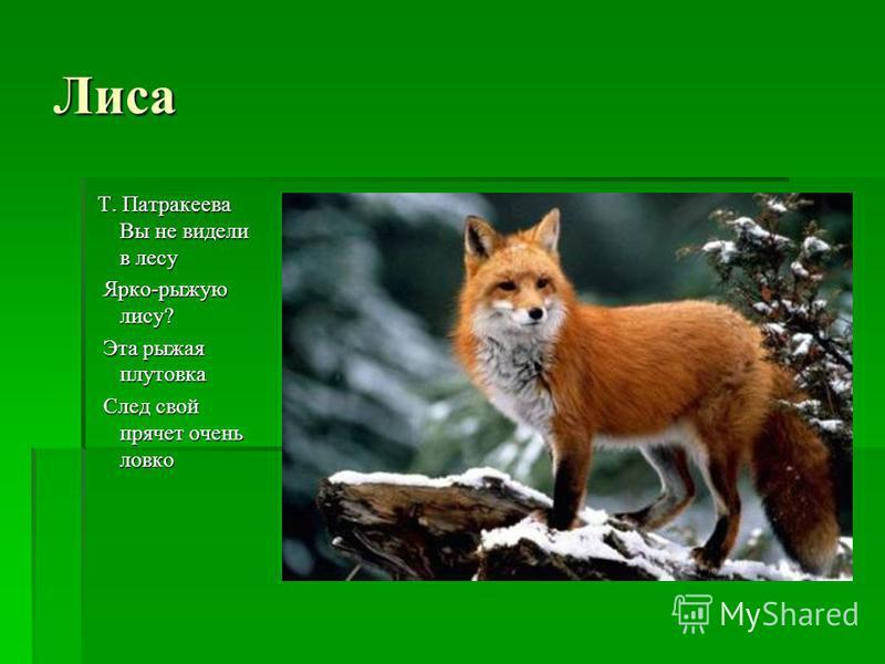 Лиса Т. Патракеева Вы не видели в лесу Ярко-рыжую лису? Ярко-рыжую лису? Эта рыжая плутовка Эта рыжая плутовка След свой прячет очень ловко След свой прячет очень ловко