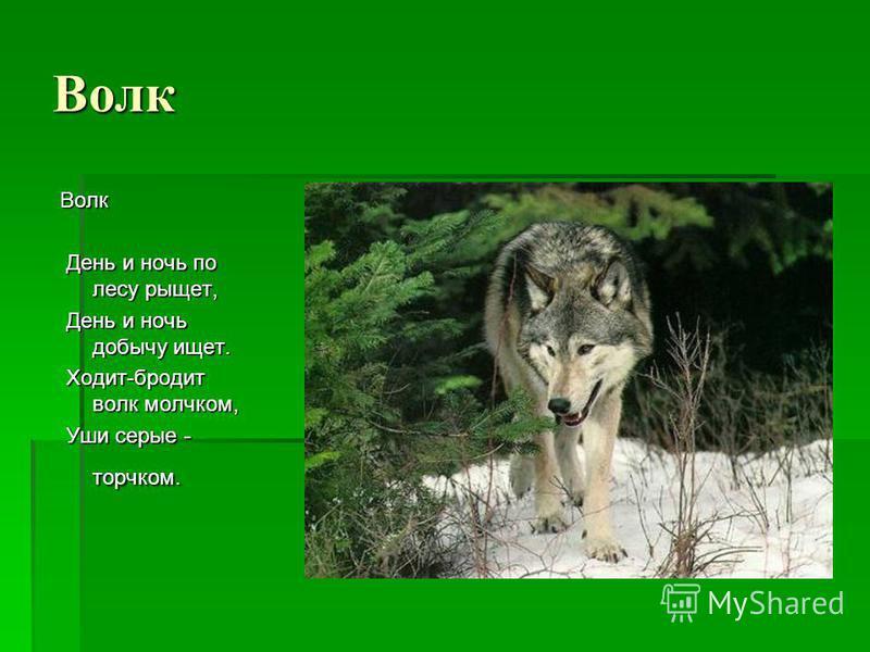 Волк Волк День и ночь по лесу рыщет, День и ночь по лесу рыщет, День и ночь добычу ищет. День и ночь добычу ищет. Ходит-бродит волк молчком, Ходит-бродит волк молчком, Уши серые - торчком. Уши серые - торчком.