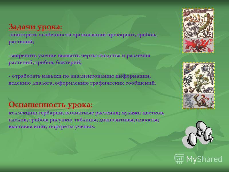 УРОК повторения-обобщения по темам: «Царства прокариоты, грибы, растения»