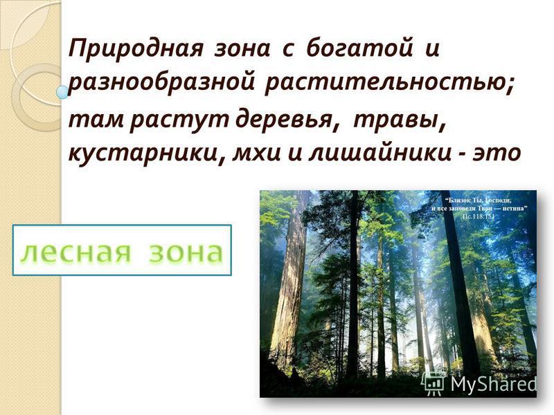Природная зона с богатой и разнообразной растительностью ; там растут деревья, травы, кустарники, мхи и лишайники - это