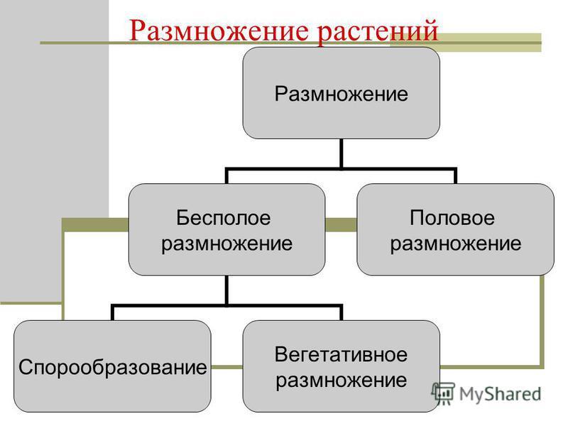 Размножение растений Размножение Бесполое размножение Спорообразование Вегетативное размножение Половое размножение