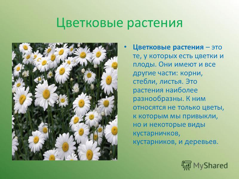 Цветковые растения Цветковые растения – это те, у которых есть цветки и плоды. Они имеют и все другие части: корни, стебли, листья. Это растения наиболее разнообразны. К ним относятся не только цветы, к которым мы привыкли, но и некоторые виды кустар