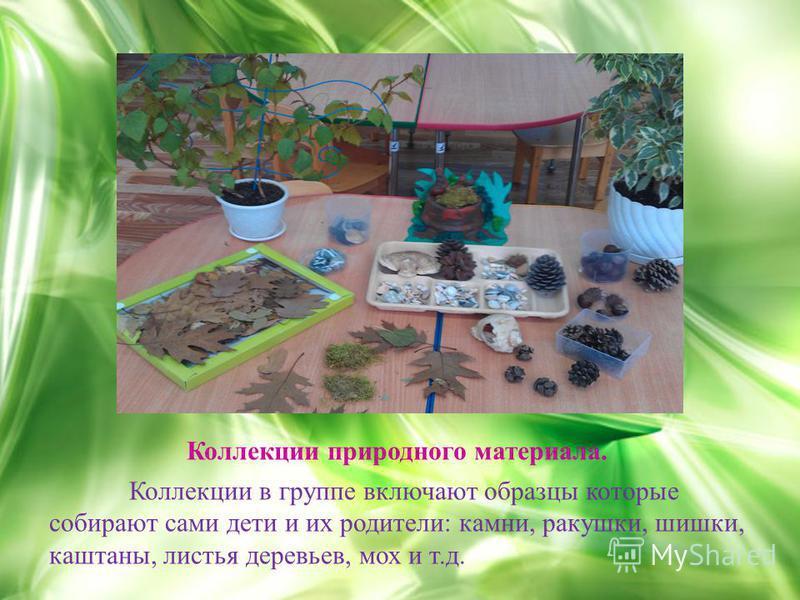 Коллекции природного материала. Коллекции в группе включают образцы которые собирают сами дети и их родители: камни, ракушки, шишки, каштаны, листья деревьев, мох и т.д.