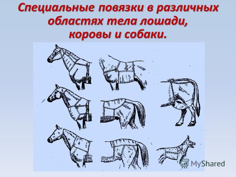 Специальные повязки в различных областях тела лошади, коровы и собаки.