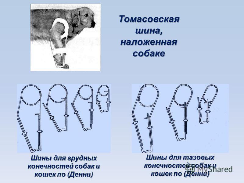 Томасовская шина, наложенная собаке Шины для грудных конечностей собак и кошек по (Денни) Шины для тазовых конечностей собак и кошек по (Денни)