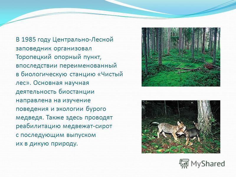 В 1985 году Центрально-Лесной заповедник организовал Торопецкий опорный пункт, впоследствии переименованный в биологическую станцию «Чистый лес». Основная научная деятельность биостанции направлена на изучение поведения и экологии бурого медведя. Так