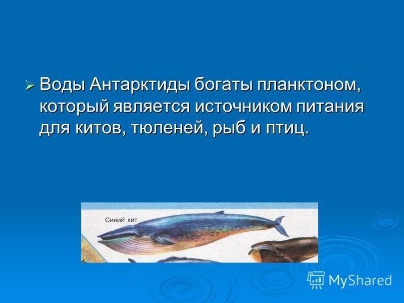 Воды Антарктиды богаты планктоном, который является источником питания для китов, тюленей, рыб и птиц. Воды Антарктиды богаты планктоном, который является источником питания для китов, тюленей, рыб и птиц.