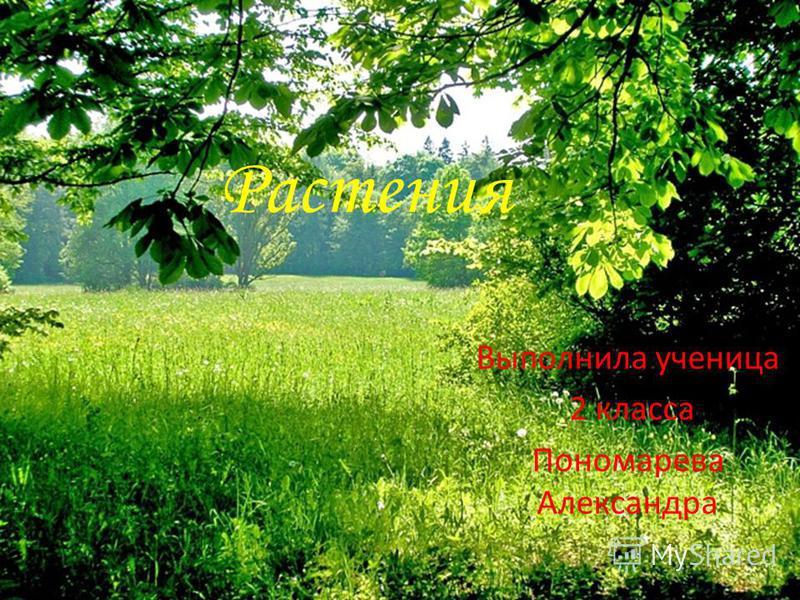 Растения Выполнила ученица 2 класса Пономарева Александра