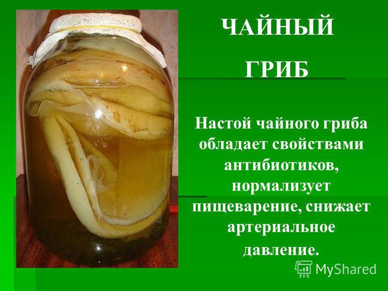 ЧАЙНЫЙ ГРИБ Настой чайного гриба обладает свойствами антибиотиков, нормализует пищеварение, снижает артериальное давление.