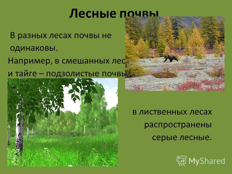 В разных лесах почвы не одинаковы. Например, в смешанных лесах и тайге – подзолистые почвы, в лиственных лесах распространены серые лесные. Лесные почвы