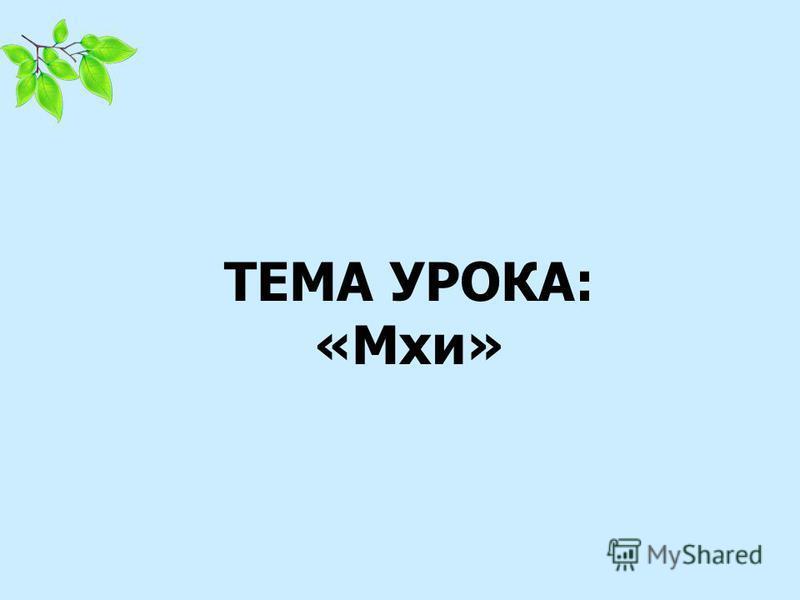 ТЕМА УРОКА: «Мхи»