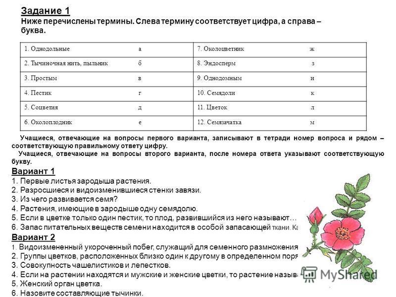 Задание 1 Ниже перечислены термины. Слева термину соответствует цифра, а справа – буква. 1. Однодольные а 7. Околоцветникж 2. Тычиночная нить, пыльник б 8. Эндоспермз 3. Простым в 9. Однодомными 4. Пестикг 10. Семядолик 5. Соцветия д 11. Цветокл 6. О