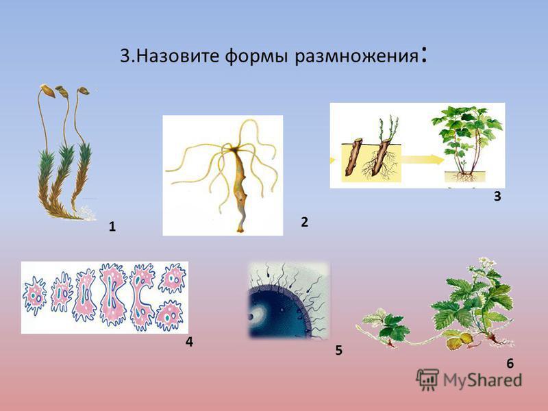 3. Назовите формы размножения : 1 5 4 3 2 6