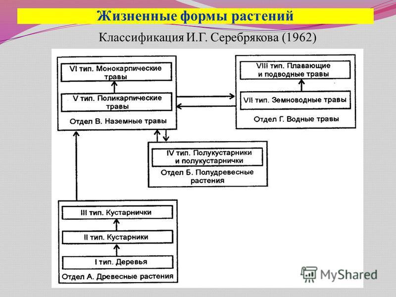 Жизненные формы растений Классификация И.Г. Серебрякова (1962)
