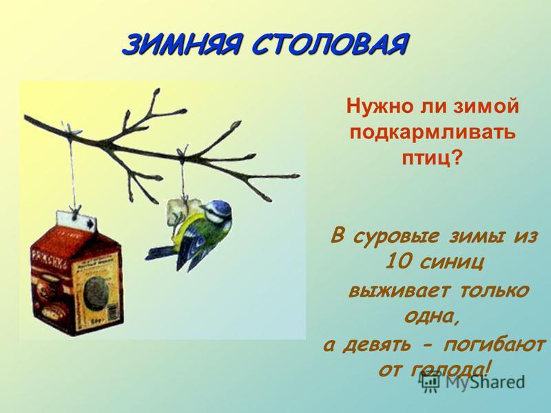 ЗИМНЯЯ СТОЛОВАЯ Нужно ли зимой подкармливать птиц? В суровые зимы из 10 синиц выживает только одна, а девять - погибают от голода!