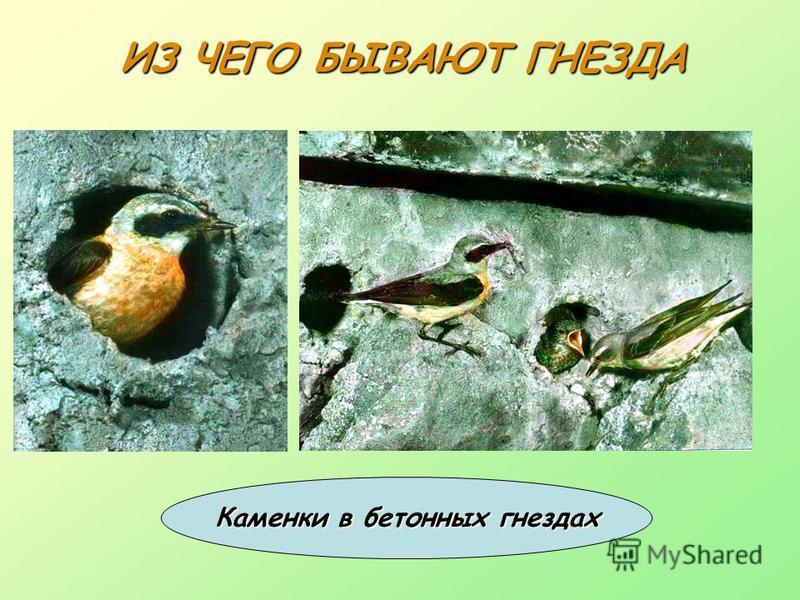 ИЗ ЧЕГО БЫВАЮТ ГНЕЗДА Каменки в бетонных гнездах
