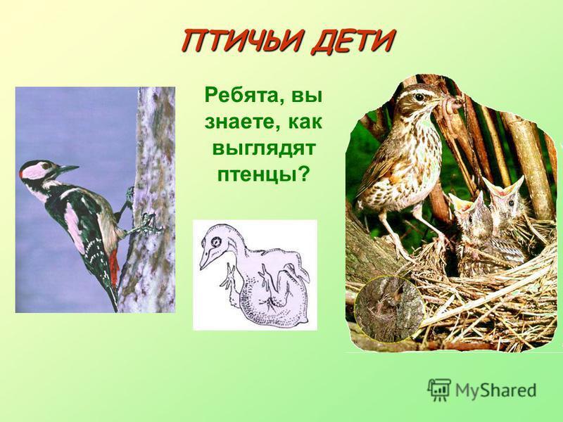 ПТИЧЬИ ДЕТИ Ребята, вы знаете, как выглядят птенцы?