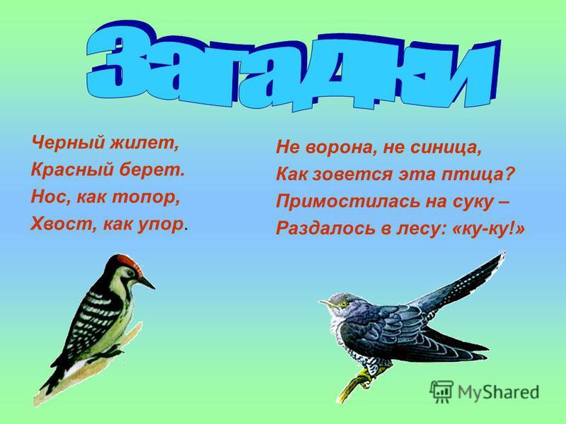 Черный жилет, Красный берет. Нос, как топор, Хвост, как упор. Не ворона, не синица, Как зовется эта птица? Примостилась на суку – Раздалось в лесу: «ку-ку!»