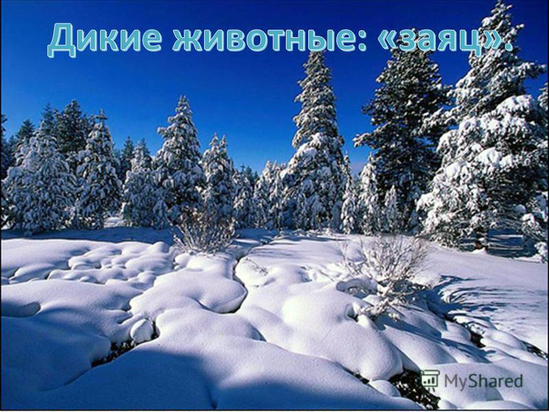 Животные леса зимой