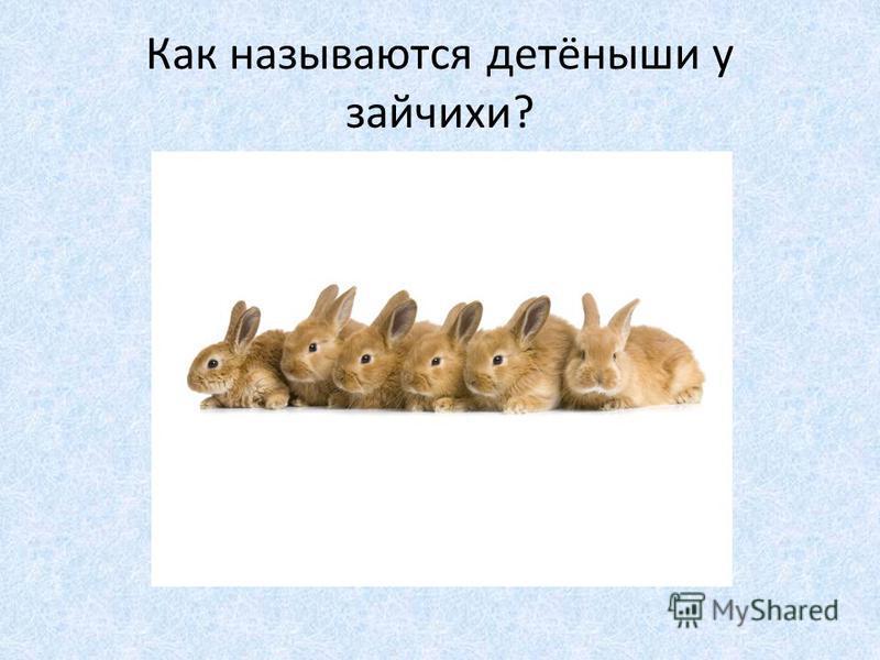 Как называются детёныши у зайчихи?