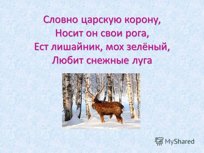 Словно царскую корону, Носит он свои рога, Ест лишайник, мох зелёный, Любит снежные луга