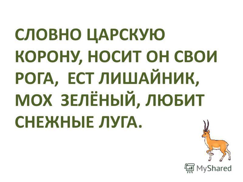 ЗАГАДКИ «ДИКИЕ ЖИВОТНЫЕ» Автор презентации Марина Шадрина