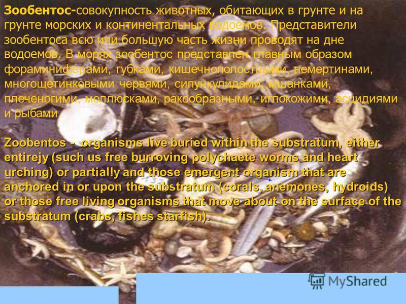 Зообентос-совокупность животных, обитающих в грунте и на грунте морских и континентальных водоемов. Представители зообентоса всю или большую часть жизни проводят на дне водоемов. В морях зообентос представлен главным образом фораминиферами, губками,