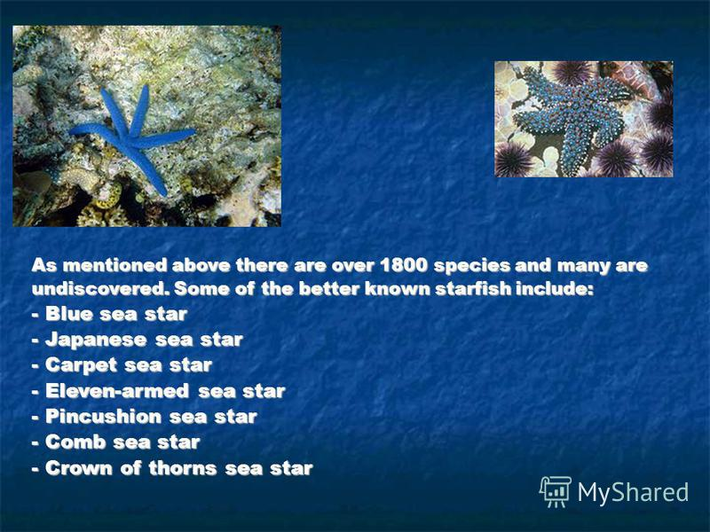 As mentioned above there are over 1800 species and many are undiscovered. Some of the better known starfish include: - Blue sea star - Japanese sea star - Carpet sea star - Eleven-armed sea star - Pincushion sea star - Comb sea star - Crown of thorns