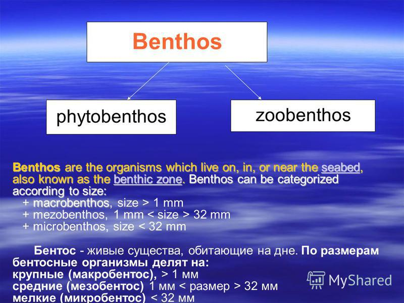 Benthos phytobenthos zoobenthos Benthos are the organisms which live on, in, or near the seabed, also known as the benthic zone.Benthos can be categorized according to size: Benthos are the organisms which live on, in, or near the seabed, also known