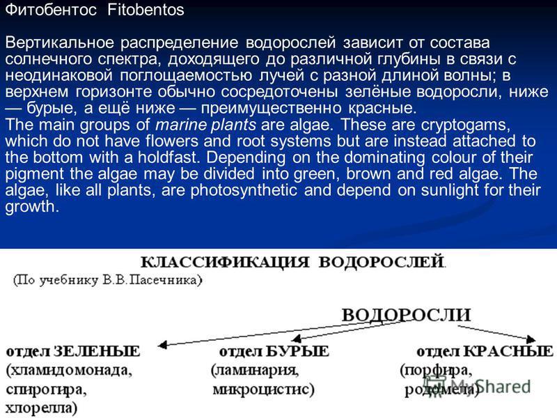 Фитобентос Fitobentos Вертикальное распределение водорослей зависит от состава солнечного спектра, доходящего до различной глубины в связи с неодинаковой поглощаемостью лучей с разной длиной волны; в верхнем горизонте обычно сосредоточены зелёные вод