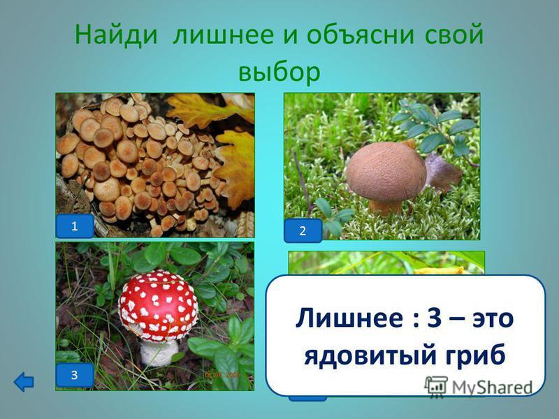 Клетка грибов Юные микологи задумались: какого вещества в стенках клеток грибов содержится больше - глюкозы, целлюлозы, пектина или хитина? Помогите им. Больше хитина.