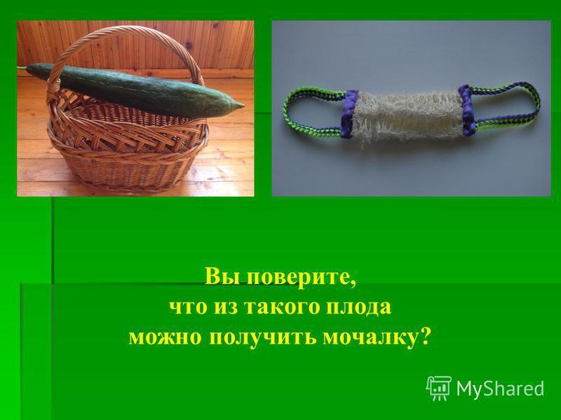 Вы поверите, что из такого плода можно получить мочалку?