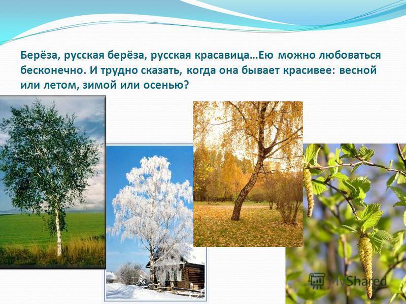 Берёза, русская берёза, русская красавица…Ею можно любоваться бесконечно. И трудно сказать, когда она бывает красивее: весной или летом, зимой или осенью?
