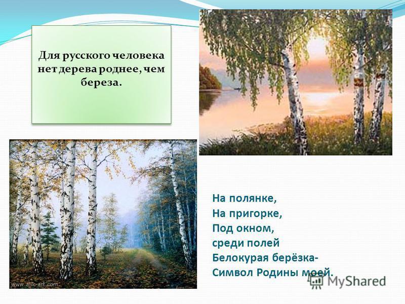 На полянке, На пригорке, Под окном, среди полей Белокурая берёзка- Символ Родины моей. Для русского человека нет дерева роднее, чем береза.