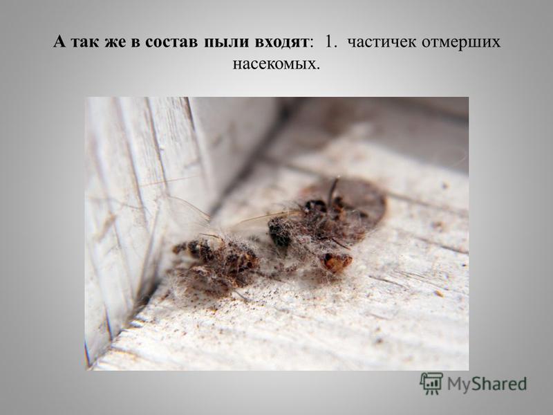 А так же в состав пыли входят: 1. частичек отмерших насекомых.