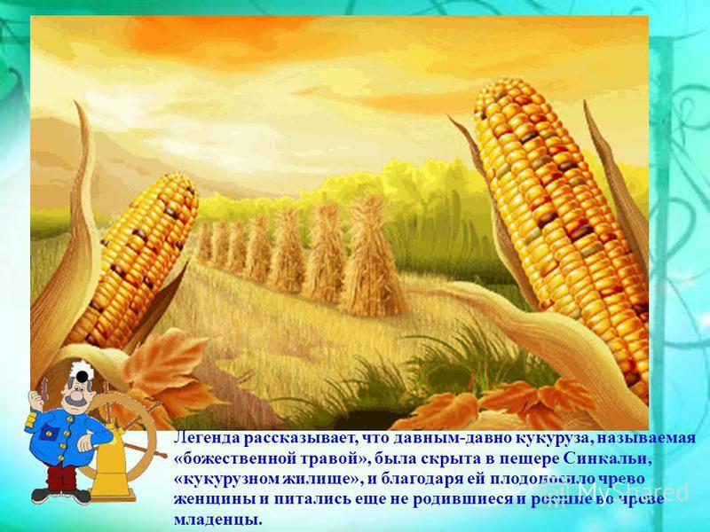 Л егенда рассказывает, что давным-давно кукуруза, называемая «божественной травой», была скрыта в пещере Синкальи, «кукурузном жилище», и благодаря ей плодоносило чрево женщины и питались еще не родившиеся и росшие во чреве младенцы.