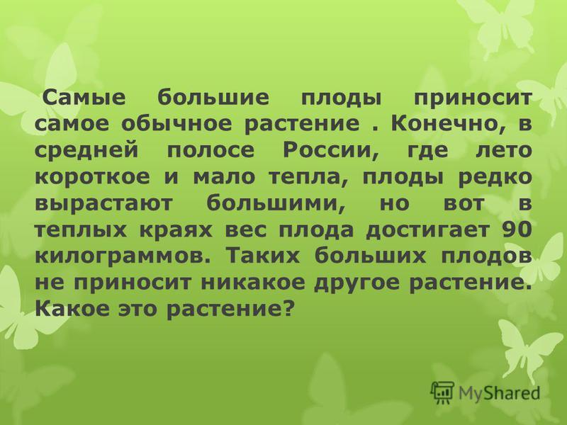 Самые большие плоды приносит самое обычное растение. Конечно, в средней полосе России, где лето короткое и мало тепла, плоды редко вырастают большими, но вот в теплых краях вес плода достигает 90 килограммов. Таких больших плодов не приносит никакое