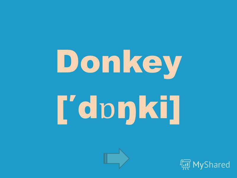 Donkey [d ɒ ŋki]