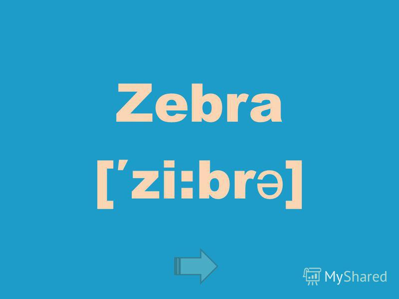 Zebra [zi:br ə ]