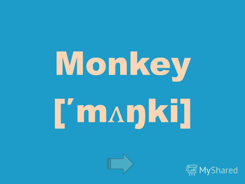 Monkey [m ʌ ŋki]