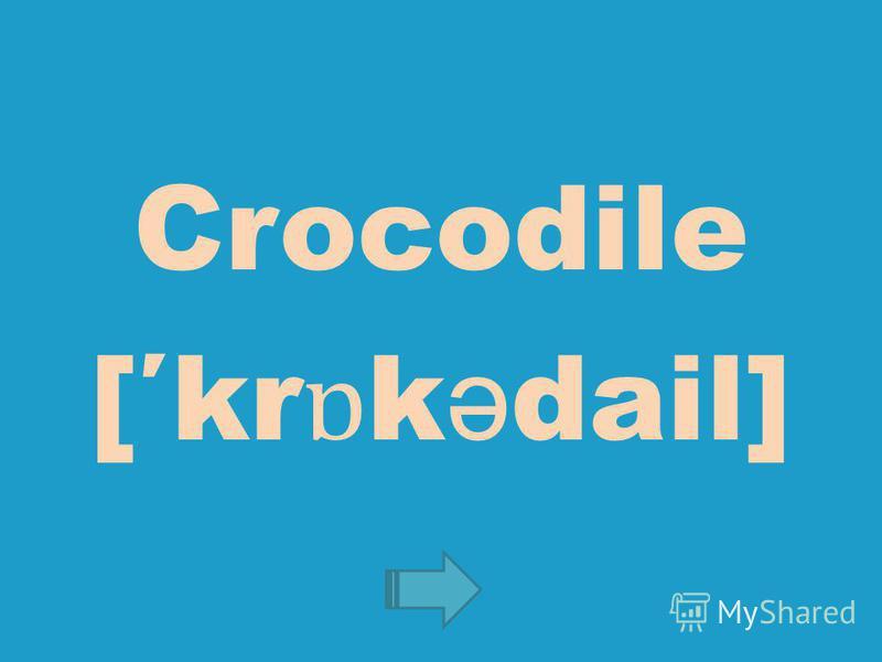 Crocodile [kr ɒ k ə dail]
