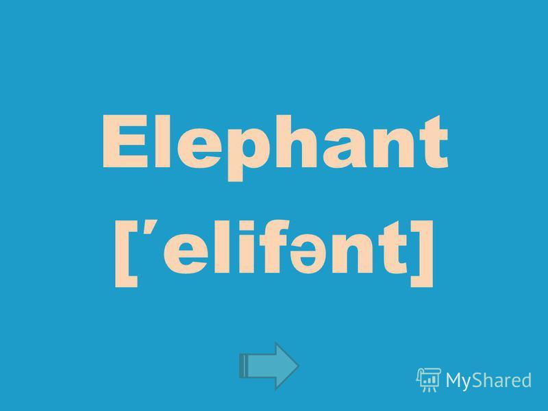 Elephant [elif ə nt]