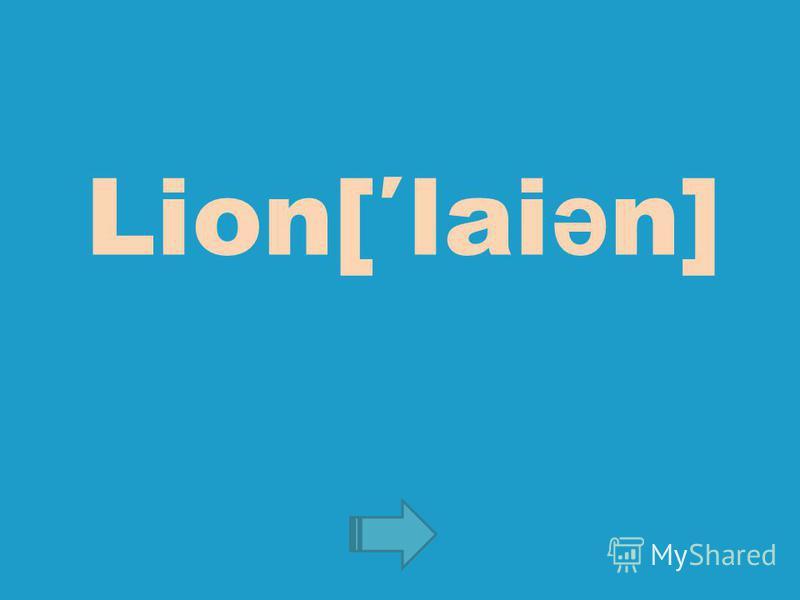 Lion[lai ə n]