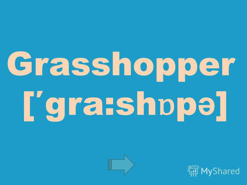 Grasshopper [gra:sh ɒ p ə ]