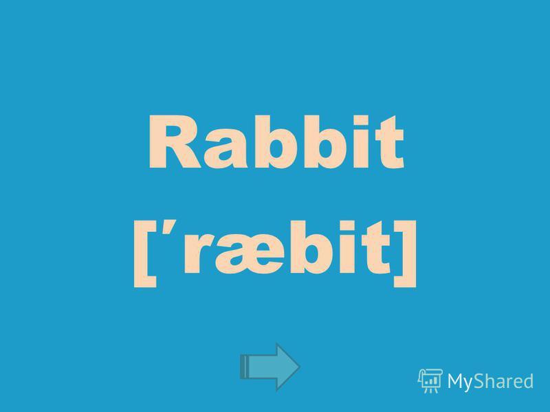 Rabbit [ræbit]