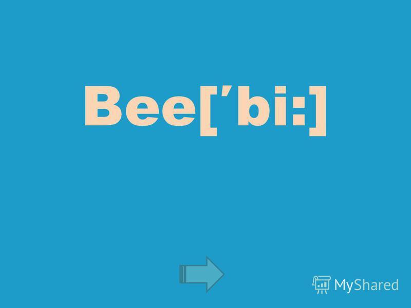 Bee[bi:]