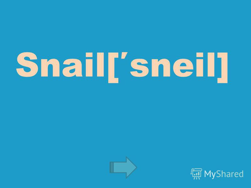 Snail[sneil]