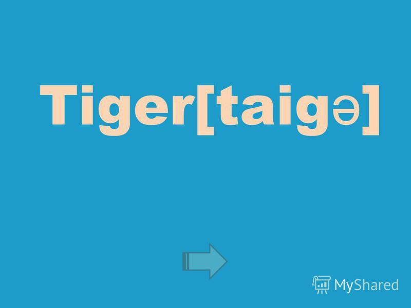 Tiger[taig ə ]