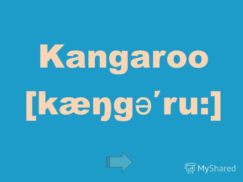 Kangaroo [kæŋg ə ru:]